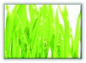 Trawa. Świeża zieleń - Obraz na płótnie