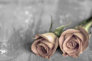 Samotne róże BW - fototapeta