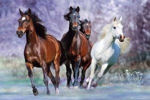 Bob Langrish - Uciekające Konie - plakat