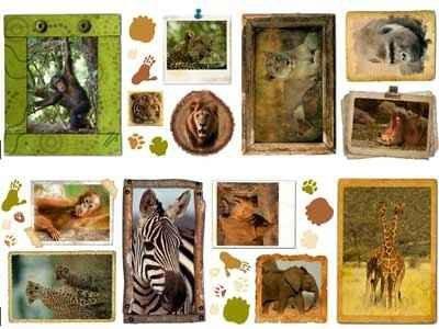 Naklejki zwierzęta National Geographic