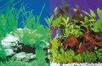 Hobby Tło akwariowe. 30cm rośliny/rośliny 25M