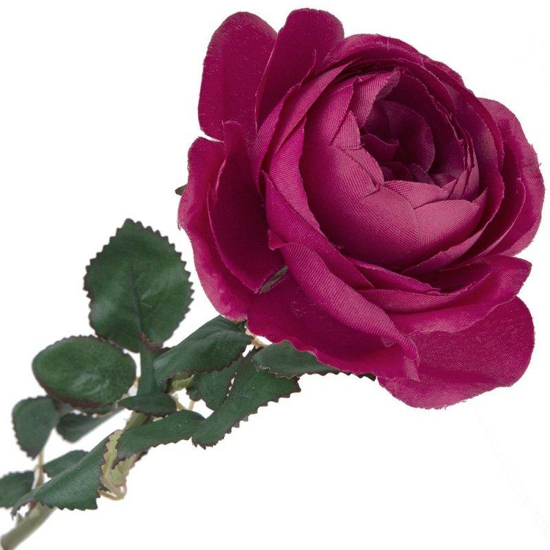 Gałązka z Listkami Róża Peoniowa Amarant