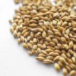Słód piwowarski monachijski typ I 1 kg