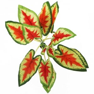 Bello Plant-Devil's Ivy Red-Roślina XL