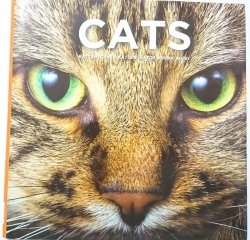 CATS – A MASTERPIECE OF NATURE 2009