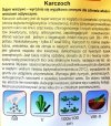 Karczoch zwyczajny nasiona Plantico