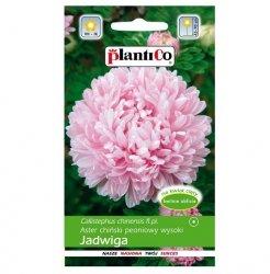 ASTER PEONIOWY różowy JADWIGA nasiona kwiatów 1g
