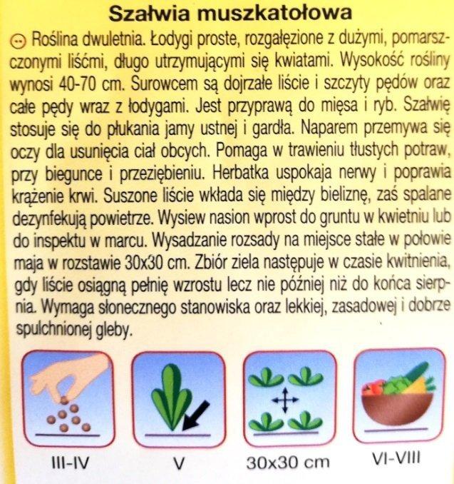 Szałwia muszkatołowa nasiona PLantico
