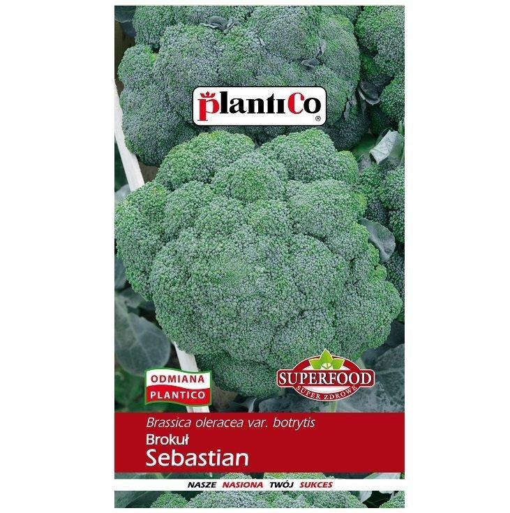 Brokuł Sebastian nasiona