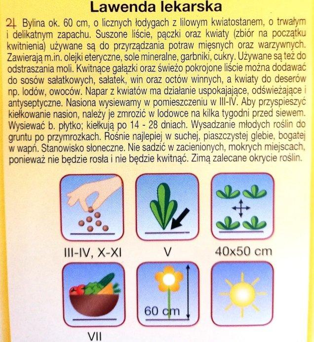 Lawenda lekarska nasiona Plantico