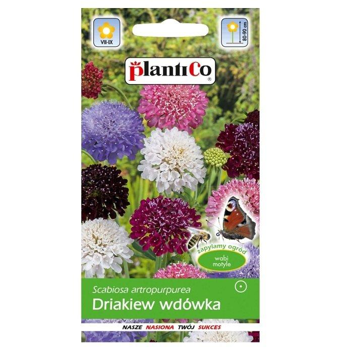 Drakiew wdówka nasiona Plantico