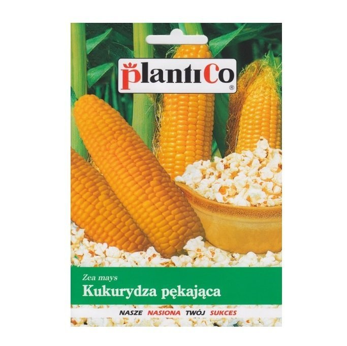 Kukurydza pękająca JANTAR na pop-corn nasiona 10g