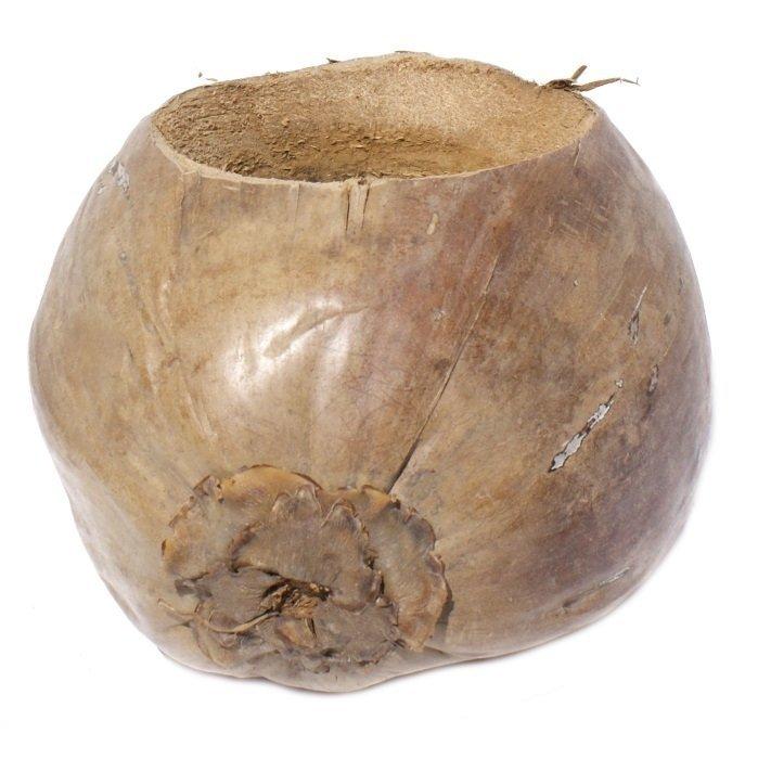 Doniczka z całego orzecha kokosowego