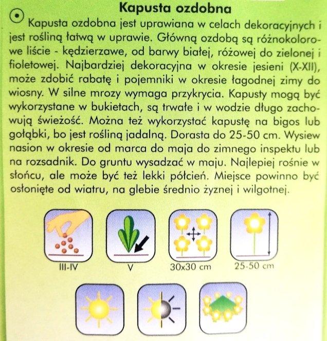 Kapusta ozdobna nasiona Plantico