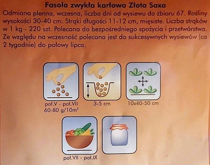 Fasola Złota Saxa nasiona Plantico