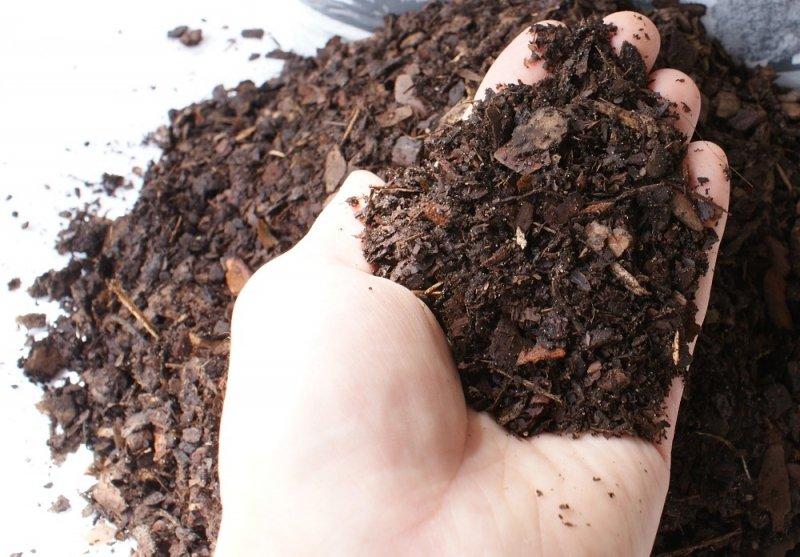 Kora sosnowa drobna jakość HORTIGRUNT