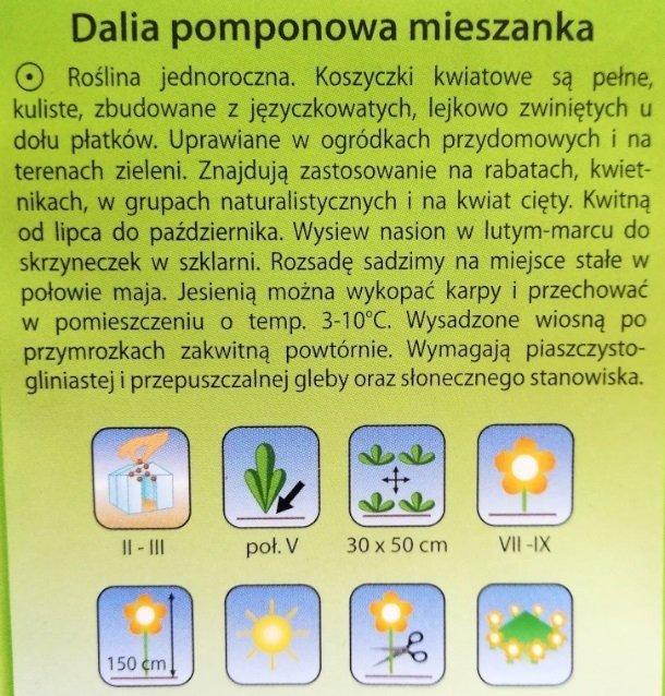 Dalia pomponowa mix nasiona Plantico