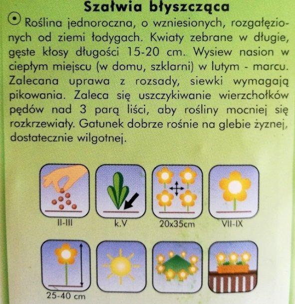 Szałwia błyszcząca fioletowa nasiona Plantico