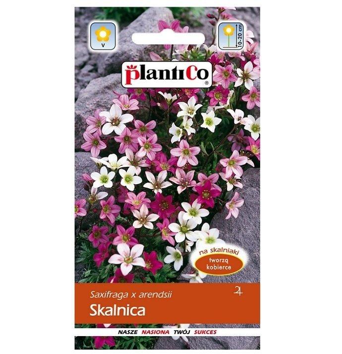 Skalnica nasiona Plantico