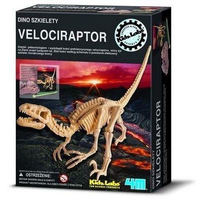 Wykopaliska Velociraptor - dino szkielet