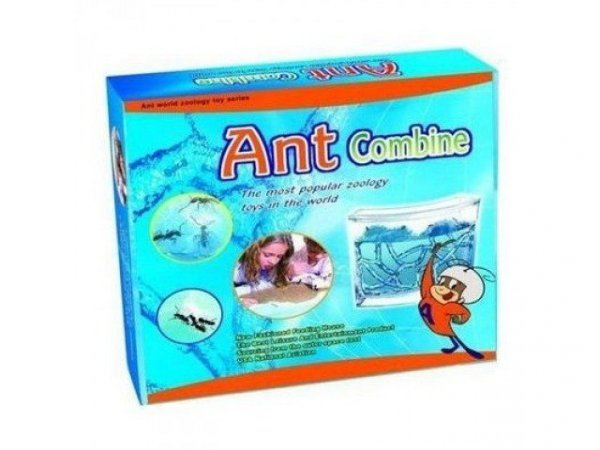 Akwarium dla mrówek - domowe mrowisko