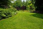 Zwalczanie chwastów na trawnikach.