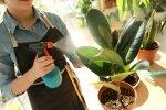 Akcesoria do uprawy roślin - 5 przydatnych produktów, które ułatwią Ci pielęgnację roślin doniczkowych.