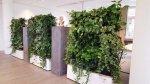 Jak założyć zieloną ścianę w biurze ?
