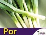 Por wczesny Bulgaarse Reuzen (Allium porrum) 1 g