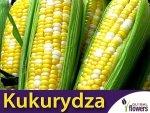 Kukurydza cukrowa Ramondia F1 żółto-biała (Zea mays ssp.saccharata) 10 g