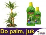 Agrecol Nawóz do palm, juk i dracen 0,75L