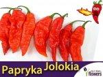 Papryka Bhut Jolokia Red (Capsicum chinense x frutescens)