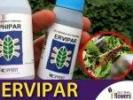 ERVIPAR osiec mszycowy (do zwalczania mszyc)