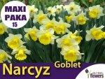 MAXI PAKA 15 SZT Narcyz Goblet (Narcissus) CEBULKI