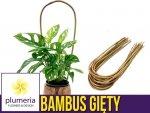 Bambus gięty łuk - podpora do roślin 45 cm x 8/10 mm - 1 szt.
