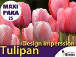 MAXI PAKA 25 szt Tulipan Darwina 'Design Imperssion' (Tulipa) CEBULKI