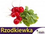 Rzodkiewka Saxa 2 (Raphanus sativus) 5+2,5g