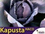 Kapusta czerwona Haco (Brassica oleracea convar. capitata var. rubra) 50g
