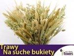 Mieszanka traw na suche bukiety Nasiona 2 g