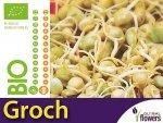BIO Groch - nasiona na kiełki 40g