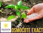 OSMOCOTE Exact Standard - Nawóz uniwersalny długo działający 5-6 m-cy 20g