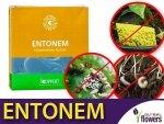 ENTONEM 2x250 milionów nicieni (do zwalczania wciornastków i ziemiórek)