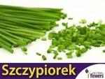 Szczypiorek Medium Leaf (Allium schoenoprasum) XXL 500g
