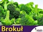 Brokuł Sebastian (Brassica oleracea c. botrytis var. cymosa) 2g