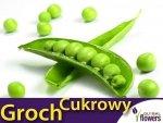 Groch Cukrowy - zielony groszek Bajka (Pisum sativum) 40g