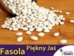 Fasola tyczna Piękny Jaś  (Phaseolus coccineus) XXL 1000g