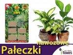 COMPO Pałeczki nawozowe  do roślin zielonych 30 szt