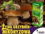 Grzybnia Grzyby Leśne Drzew Iglastych Mikoryza op. Xl 2 litry