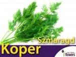Koper ogrodowy. Szmaragd (Anethum graveolens) 5g
