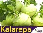 Kalarepa Delikates Biała (Brassica oleracea convar. arcephala var. gongylodes) 2g